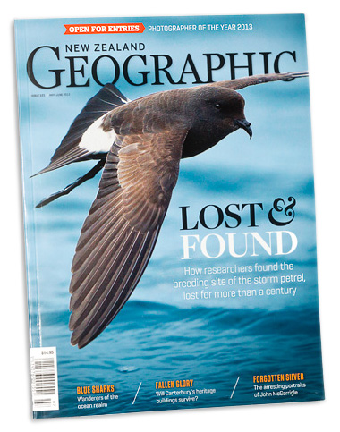 NZ Geographic NZ storm-petrel cover