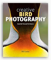 Creative bird photography